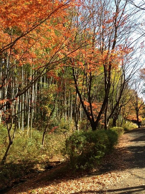 ブログ写真201111118.JPG